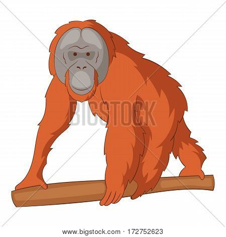 Orangutan icon. Cartoon illustration of orangutan vector icon for web