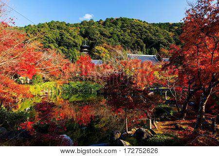 Eikando Autumn Foliage, Kyoto