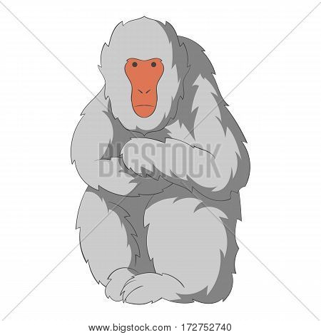 Japanese macaque icon. Cartoon illustration of japanese macaque vector icon for web