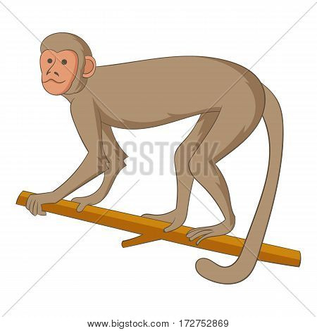 Macaque icon. Cartoon illustration of macaque vector icon for web