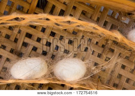 Group of silkworm in white cocoon stage background