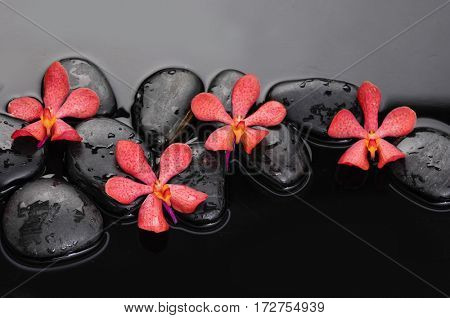 still life with black stones and four red orchid