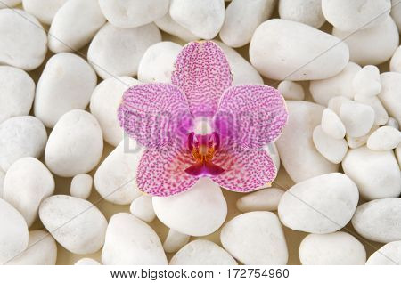white orchid with pile of white stones