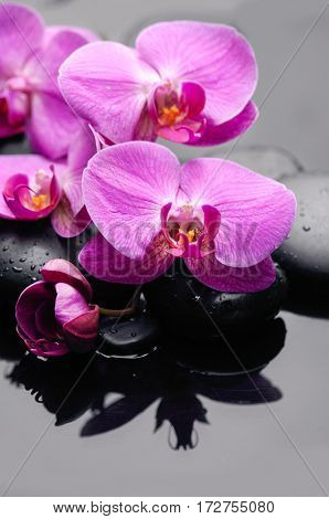 Lying on pink bouquet orchid with black stones