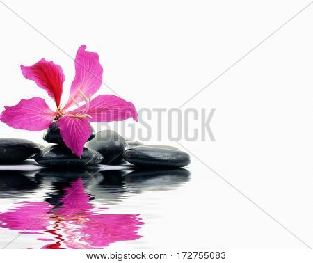 still life tropical spring flower with pebbles