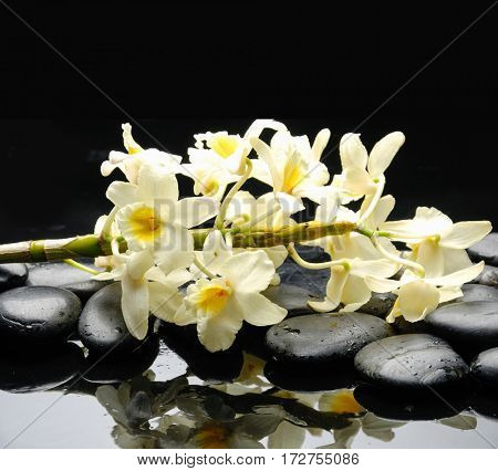 Lying on white orchid with black stones on wet background