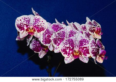 branch of gorgeous orchid flower