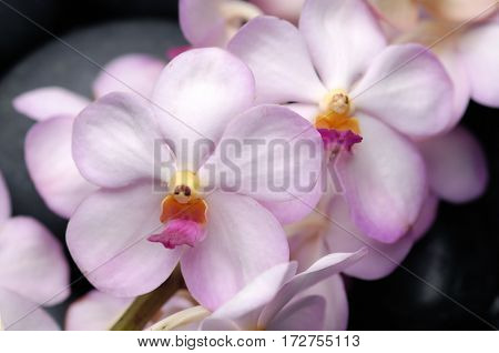 bouquet orchid with pebbles
