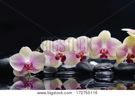 still life with black stones and branch orchid
