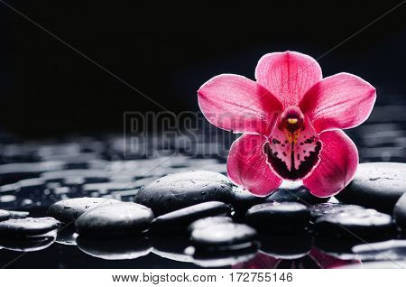 still life with black stones and red two orchid