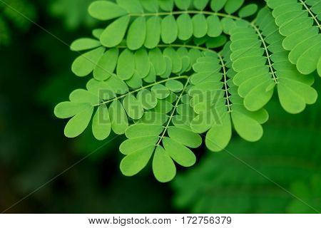 Moist Green Leaf Of Tree In Deep Forest Background