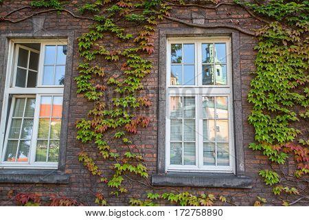 Old brick wall and windows.