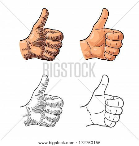 Hand showing symbol Like. Making thumb up gesture. Hand drawn design element. Vector color and black vintage engraved and flat illustration isolated on white background. Sign for poster info graphic