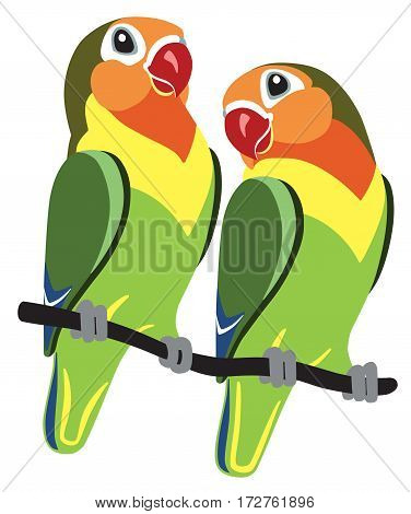 pair of cartoon parrots Fischer lovebirds agapornis isolated on white
