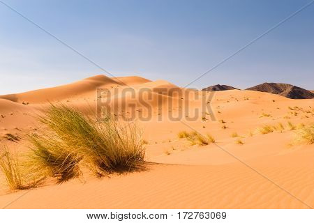 View over sand dunes in the Sahara desert Ouzina with some black mountains in the background, Morocco.