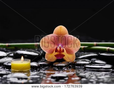 Orange orchid with black stones ,grove,candle on wet background