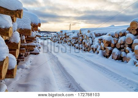 Harvesting timber logs in a forest in Russia in winter