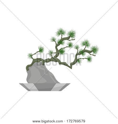 Bonsai. House plant realistic icon for interior decoration . Coniferous plant in flowerpot. Vector illustration isolated on white background