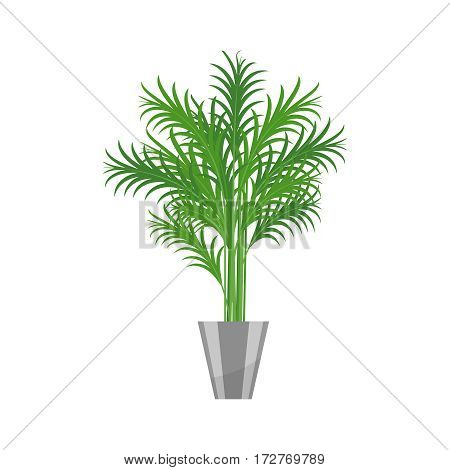 Palm tree. House plant realistic icon for interior decoration . Green plant in flowerpot. Vector illustration isolated on white background