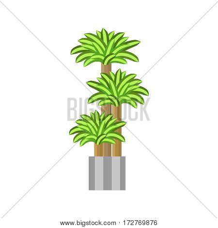 Dragon trees. Deciduous plant in flowerpot. House plant realistic icon for interior decoration .three green tree in flowerpot. Vector illustration isolated on white background