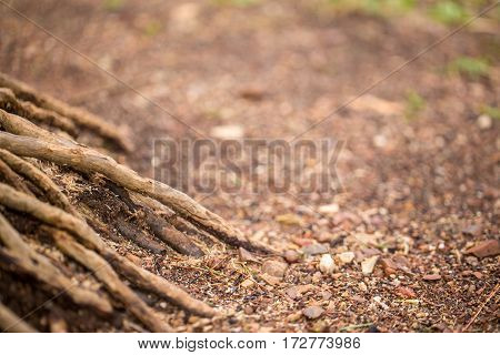Close-up view of tree root in the forest