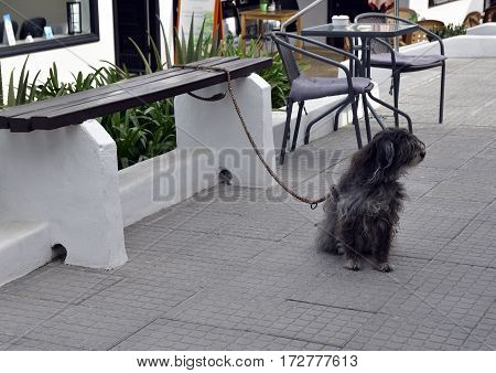 Dog attached to a table waiting for his master picture from Puerto de la Cruz Tenerife Spain.