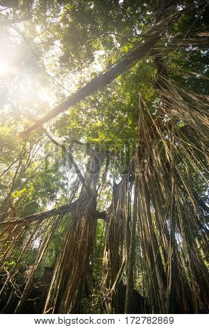 look up in the rain forest with magical sunlight passing between the trees