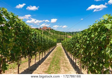 Rows of green vineyards under blue sky and small town on the hill on background in Piedmont, Northern Italy.