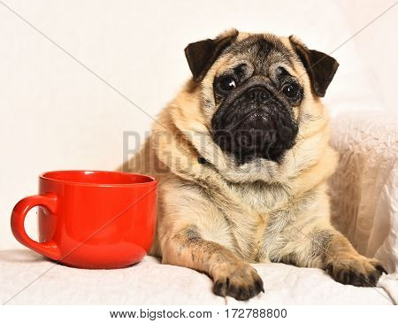 Cute Pug Dog With Red Mug