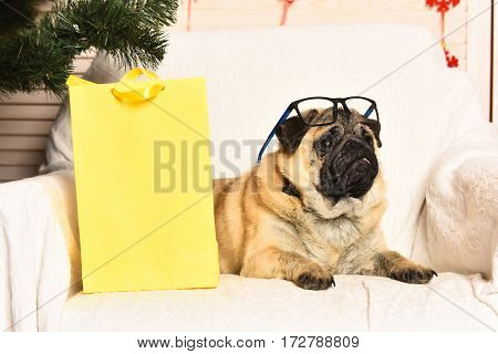 Cute Pug Dog With Glasses And Shopping Package