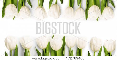 White Tulips with shadow on light background