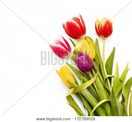 Spring tulips with green ribbon on white background