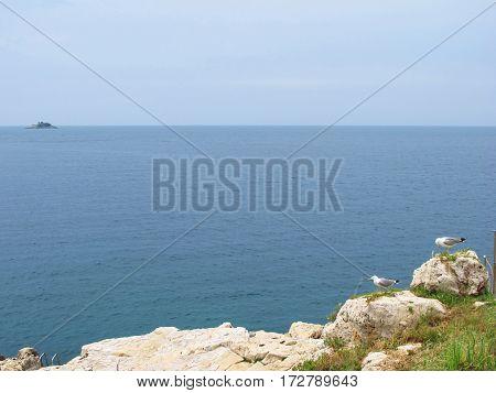 seagulls isolated in the coastline in Croatia