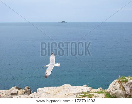 seagull flying by the sea isolated on the beach