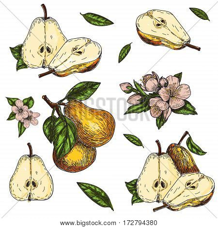vector set hand made sketch illustration of engraving leaves and flowers of pear