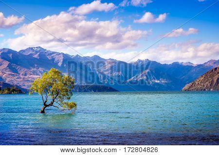 Landscape View Of That Wanaka Tree, New Zealand