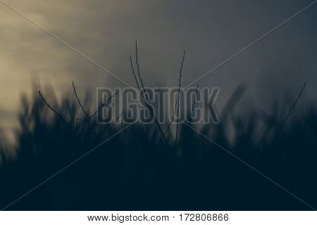 Green Grass On Natural Blue Sky Background With Nobody