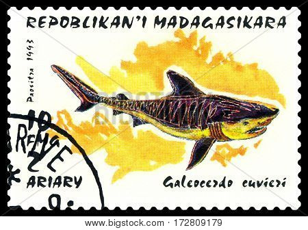 STAVROPOL RUSSIA - February 17 2017: a stamp printed by Malagasy shows Tiger shark (Galeocerdo cuvier) circa 1993