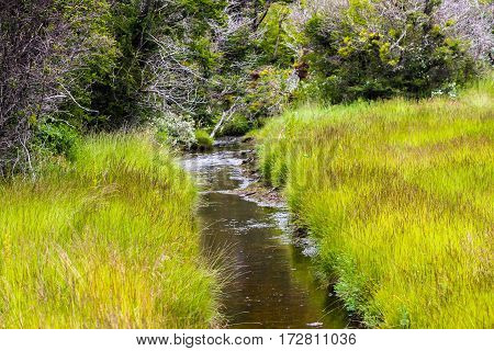 Creek surrounded by grasses (Ushuaia, Patagonia, Argentina.)