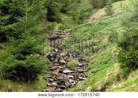 Mountain stream flowing into a stony brook