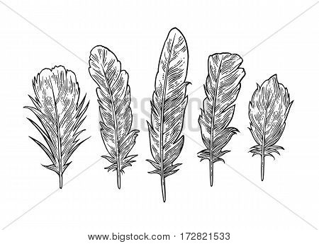 Set feathers. Vintage black vector engraving illustration. Isolated on white background. Hand drawn in a graphic style.
