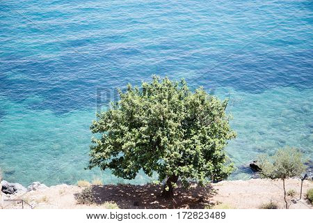 Tree In Front Of Sea