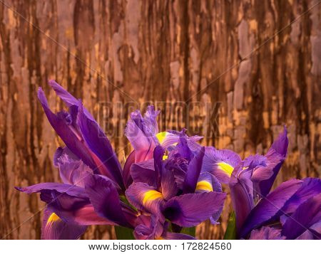 bunch of iris on painted background landscape orientation
