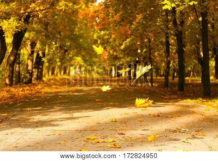 Falling leaves on blurred autumn park background