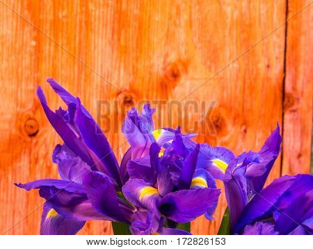 bunch of iris on plywood background landscape orientation