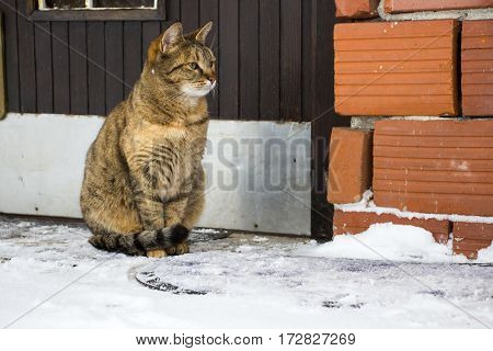 Cat sitting in front of house door