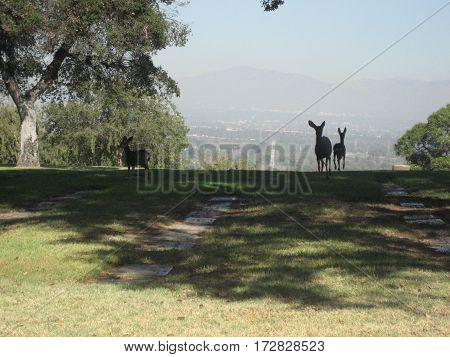 Group of mule deer wandering the hills at a local cemetery