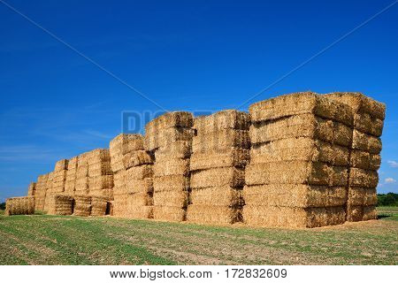 Straw bales on farmland with blue sky. Rural landscape in sunny day.