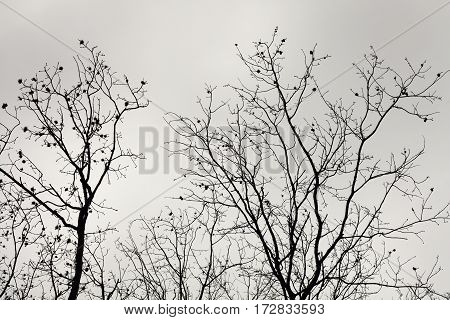 Abstract composition of tree brunches over cloudy sky.