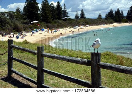 Beach at the Bermagui. Bermagui is a town on the south coast of NSW Australia in the Bega Valley Shire. The name is derived from the Dyirringanj word permageua meaning canoe with paddles.